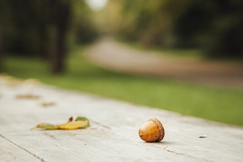 Bulgaria, Sofia, acorns on wooden bench in a park - BZF000037