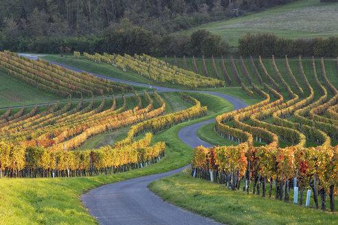 Austria, Burgenland, Oberpullendorf District, Neckenmarkt, road and vineyard in autumn - SIEF006471