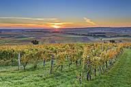 Austria, Burgenland, Oberpullendorf District, near Neckenmarkt, vineyards at sunrise in autumn, View over Deutschkreutz, Blaufraenkischland - SIEF006472