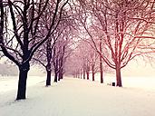 Germany, Cologne, winter at Decksteiner Weiher - GWF003766