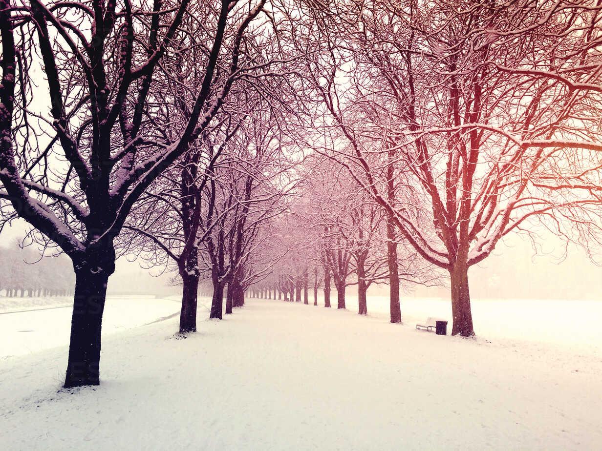 Germany, Cologne, winter at Decksteiner Weiher - GWF003766 - Gaby Wojciech/Westend61