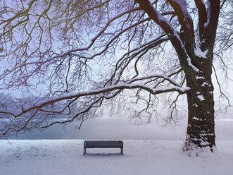 Germany, Cologne, winter at Decksteiner Weiher - GWF003767