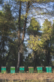 Greece, green beehives, trees in background - DEGF000310