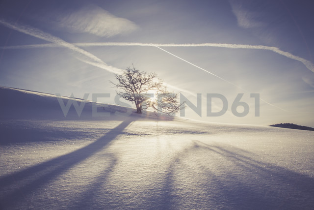 Germany, Baden-Wurttemberg, Swabian Mountains, Tree in snow covered landscape - LVF002833
