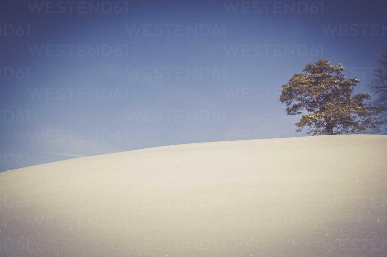 Germany, Baden-Wurttemberg, Swabian Mountains, Tree in snow covered landscape - LVF002835 - Larissa Veronesi/Westend61