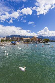 Switzerland, Vevey, Lake Geneva, townscape with swan - WDF002919