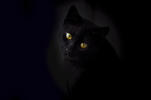 Face of black cat in front of black background - CZF000193