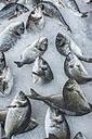 Greece, Athens, Fresh fish in market at Piraeus - DEGF000184