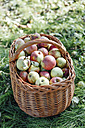 Germany, Hesse, apples in wickerbasket - IPF000188
