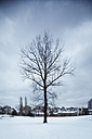Germany, bare tree in winter, buildings in the background - AKNF000003