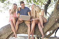 Happy friends sitting in a tree looking at laptop - ZEF004614