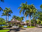 Caribbean, Jamaica, Port Antonio, palm trees at the coast - AM003793
