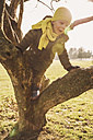 Little boy climbing on a tree in winter - MFF001494