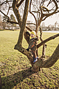 Happy little boy climbing on a tree in winter - MFF001498