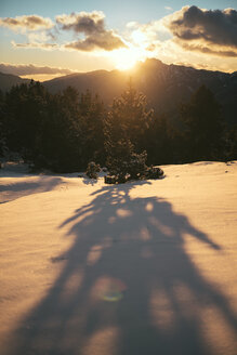 Spain, near Barcelona, Cadi-Moixero Natural Park, shadow of a tree in the snow at sunset - GEMF000056