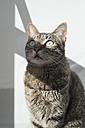Tabby cat in sunlight - RAEF000045