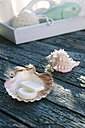 Scallop used as soap dish - GIS000005