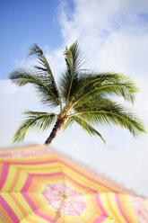 USA, Hawaii, Maui, Kaanapali, palm tree and sunshade at Kahekili Beach Park - BRF000993