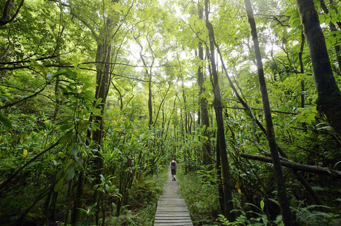 USA, Hawaii, Maui, Haleakala National Park, woman hiking on Pipiwai Trail through lush vegetation - BRF001105
