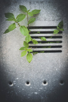 Plant growing through grid - GS000938