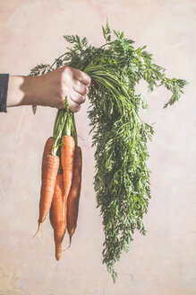 Woman's hand holding bunch of carrots - DEGF000357