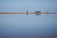 Egypt, El Gouna, trip with horses on the beach - STK001198