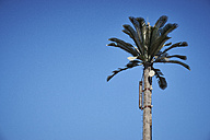 Egypt, El Gouna, cell site looking like palm tree - STKF001201