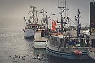 Germany, Schleswig-Holstein, Eckernfoerde, fishing boats at port, dark weather - FR000208