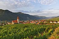 Austria, Lower Austria, Waldviertel, Weissenkirchen in der Wachau, vineyard - SIEF006499