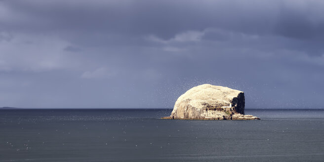 UK, Scotland, East Lothian, Bass Rock with a colony of gannets - SMAF000310