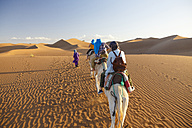 Morocco, Sahara, caravan in the desert - STD000172