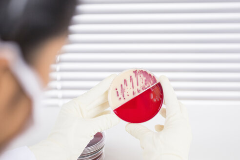 Laboratory technician examining agar plate with bacteria - DRF001552