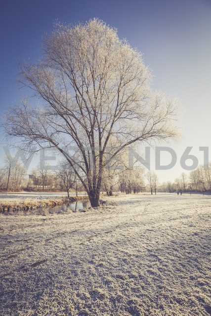 Germany, Landshut, frost-covered flood channel - SARF001448 - Sandra Roesch/Westend61