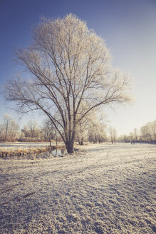 Germany, Landshut, frost-covered flood channel - SARF001448