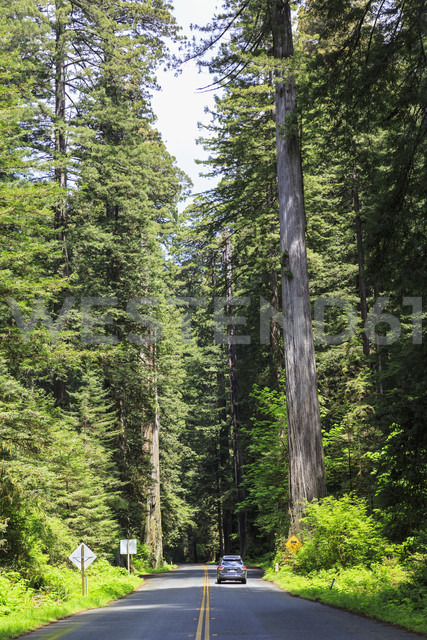 USA, California, Redwood National Park - FOF007799