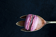 Pink macaron on silver spoon in front of black background - CSF024791