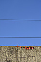 Bald vines with little red leaves on a wall in front of blue sky - AXF000747