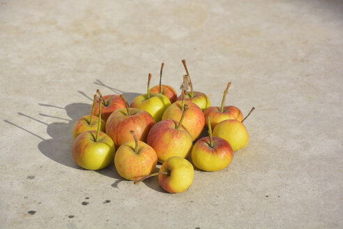 Wild apples on a stone slab in sunlight - AXF000751