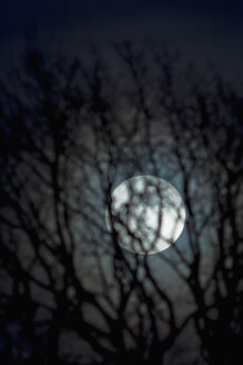 Germany, moon rise with bare tree in the foreground - UM000749