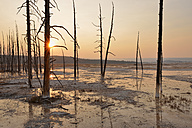 USA, Wyoming, Yellowstone National Park, dead trees in Lower Geyser Basin at sunset - RUEF001557
