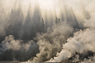 USA, Wyoming, Yellowstone National Park, steam from hot thermal springs rising up in forest near Firehole River at morning - RUEF001558