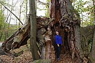 Austria, Burgenland, Liebing chestnut trees - SIEF006509