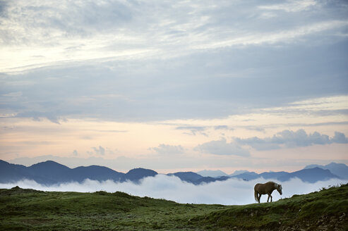 Austria, Kranzhorn, Horse on mountain pasture - MAOF000084