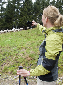 Austria, Maria Alm, blond woman taking a photography of flock of sheep with smartphone - NNF000194