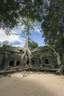 Cambodia, Siem Reap, Angkor Wat, Ta Prohm Temple - NNF000217