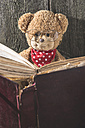 Teddy-bear with glasses reading a book - DEGF000384