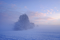 Germany, Gelting, mystical winter landscape at morning light - SIEF006524