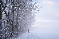 Germany, Gelting, walker with two dogs in winter landscape - SIEF006526