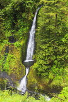 USA, Oregon, Columbia River Gorge, Hood River, Loowit Falls - FOF007893