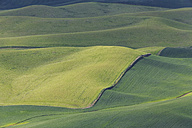 USA, Idaho, Palouse, view to rolling landscape with wheat fields from Steptoe Butte - FOF007922
